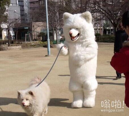 哈哈,天气不错,出来遛狗