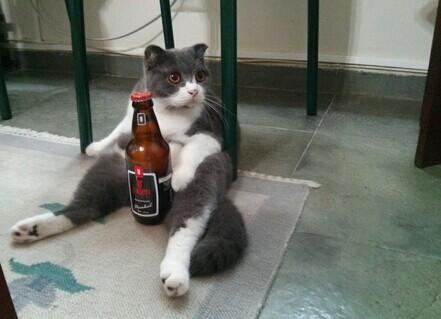 他们告诉我,我的猫的品种可以坐。我不相信,直到今天早上