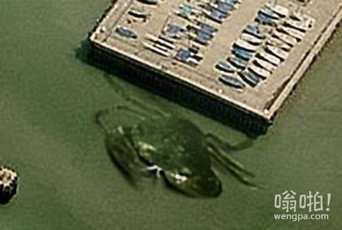 """英国港口现""""15米长巨蟹"""" 盘点那些出现在人们视野中的水中巨怪"""