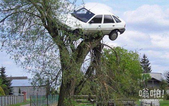 让人哭笑不得的汽车事故!(15图)