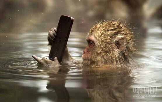 有猴子的应用程序吗,日本猕猴看着iPhone屏幕呆若木鸡