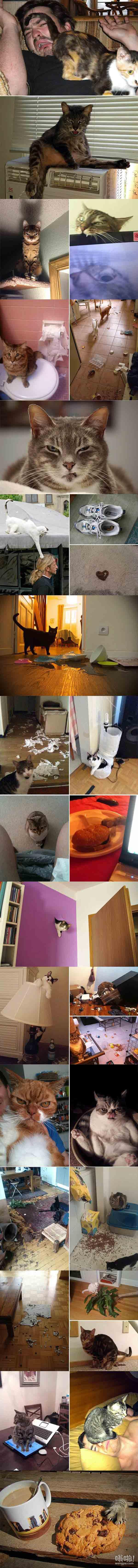 这就是为什么我没有养猫