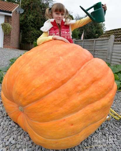 万圣节我来了……我的超级南瓜:8岁女孩帮助南瓜成长怪物蔬菜