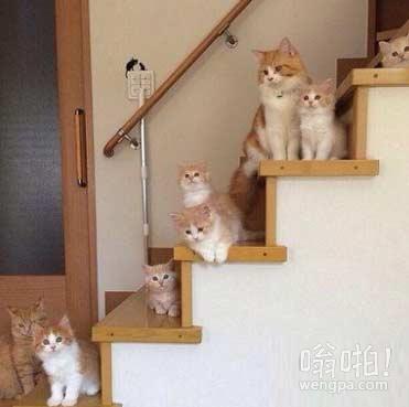 这楼梯我们买了