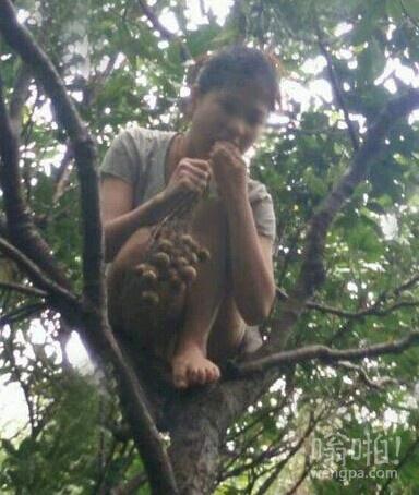 树上蹲个猴
