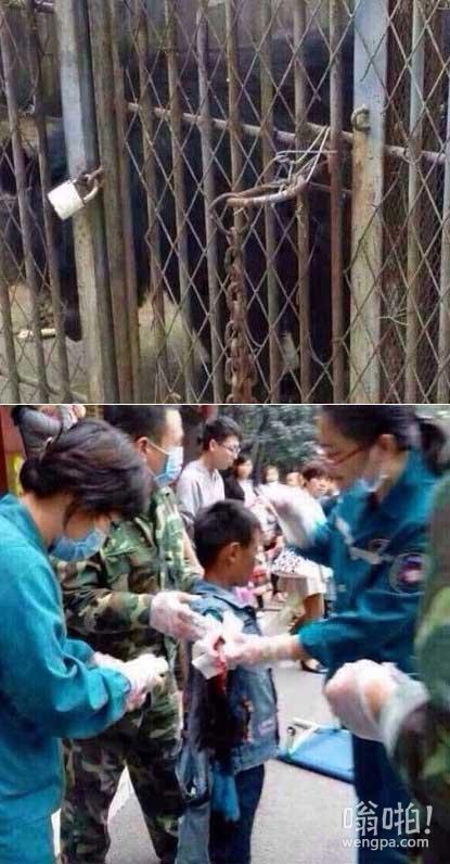 河南9岁男孩在公园被熊咬断胳膊 动物园方面留5000元后玩消失