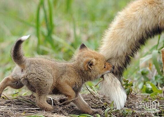 Firefox插件