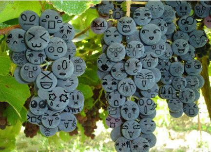 一串串表情丰富的葡萄,你还舍得吃吗?