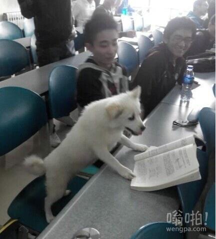 连狗都TM在学习,真的觉得我太堕落了,罪过罪过