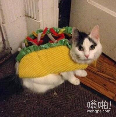 Taco(墨西哥卷饼)猫退去法术后