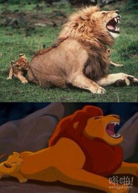 狮子爸爸假装是在痛苦中