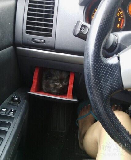 小猫发现手套箱的新用途