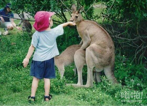 这小子他不知道,当一对袋鼠需要一些独处的时间。