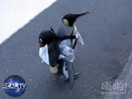我现在真的需要一个企鹅