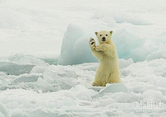 北极熊霹雳舞
