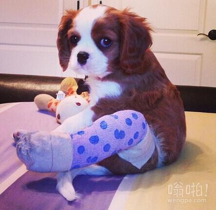 女友的小狗受伤了,给它包扎了一下