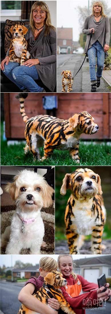 动物爱好者,她的宠物狗被她用宠物专用染料画有橙色和黑色条纹,看起来像一只老虎