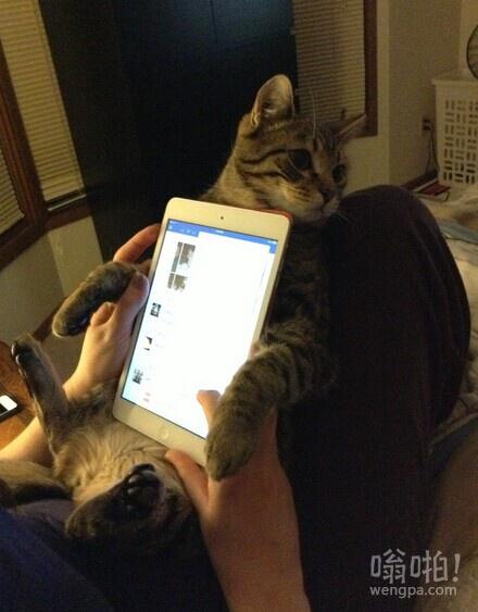 新的iPad支架