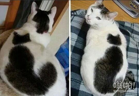 我知道你是猫