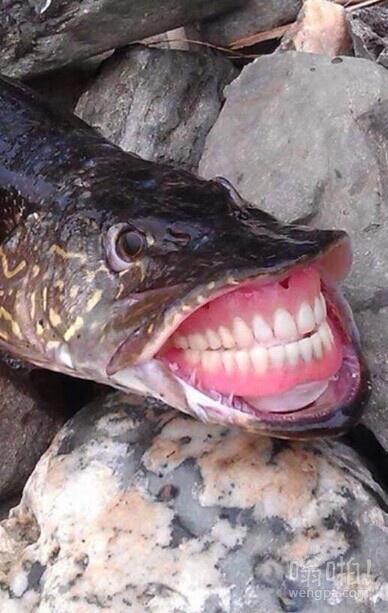 我知道你有一口好牙