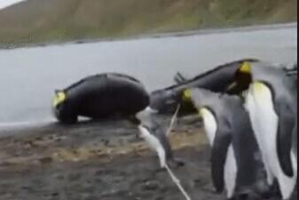 把一根线放到一群企鹅前是什么样呢