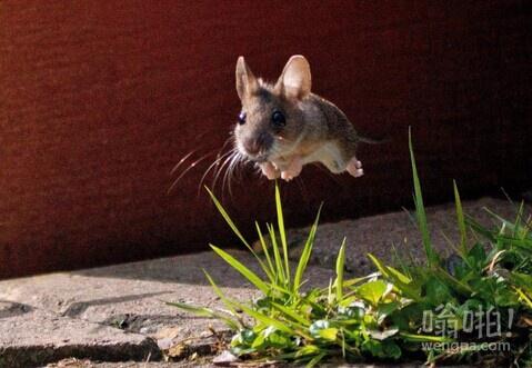 老鼠过街萌萌哒