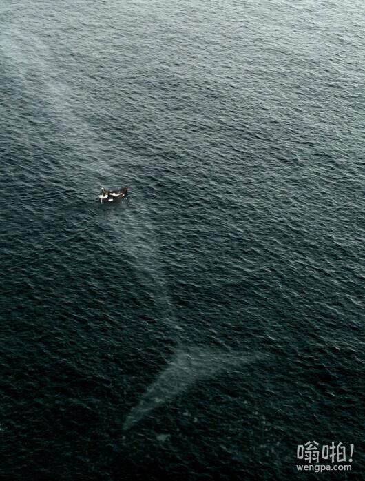为什么我害怕的海洋