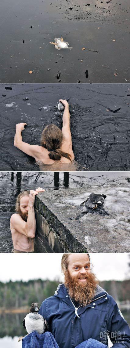 挪威男子路过湖面,发现一只困在冰下的鸭子,遂破冰而入,奋力抢救,看着好有爱。