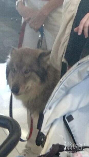 机场大厅门口,这是狗么