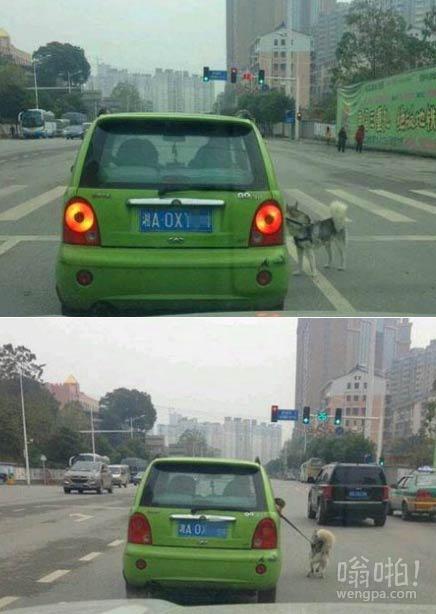 任性车主开车遛狗:狗脚上泥巴多会弄脏车
