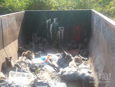 佛罗里达州狮子国家野生动物园里面的垃圾箱