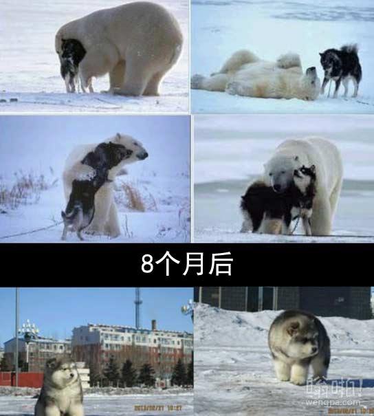 极地爱情故事