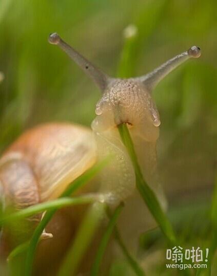 蜗牛吃什么?哈哈,原来吃这个