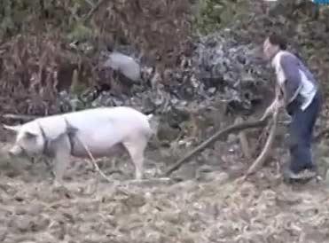 再也不要骂蠢人、懒人是猪了
