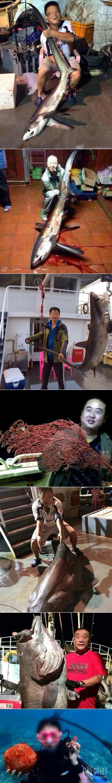 网曝西沙旅游组团捕捞濒危长尾鲨红珊瑚:终于知道为什么中国人去哪都需要签证了