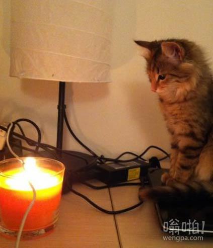 猫咪看我烧电线,也是醉了