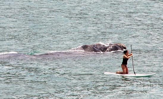 当你在海上划着小舟,却不知道后方出现一个庞然大物
