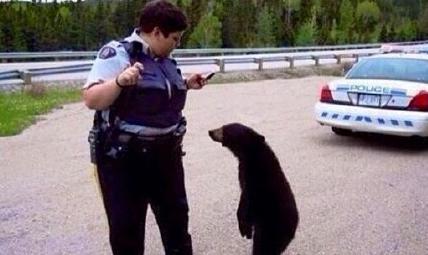 当棕熊违反交通规则,被警察拦下