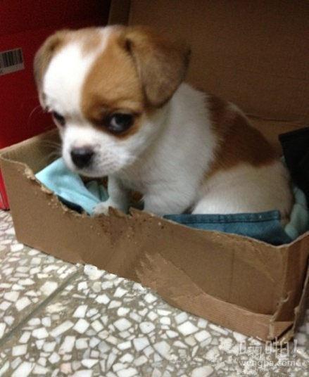 捡来的小狗,它叫李二狗,每次给它拍照它都是这个眼神,忧桑中带鄙视,鄙视中带不屑。
