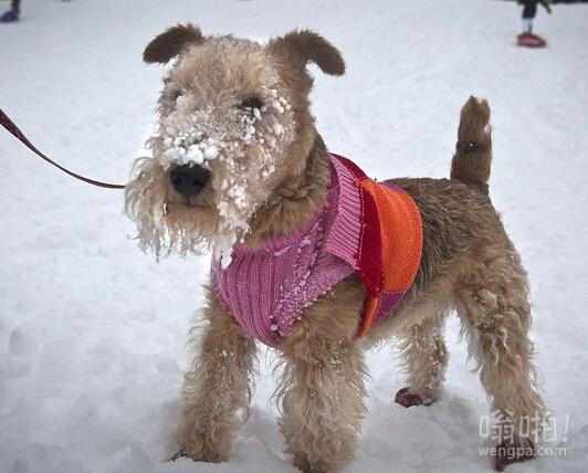 这可爱的狗在中央公园和它的主人散步