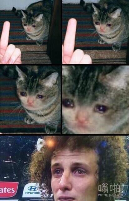 看到这种猫后,我会忍不住想起他.