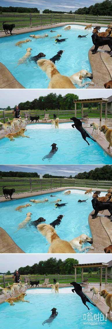小狗泳池派对也许会是最幸福的事情