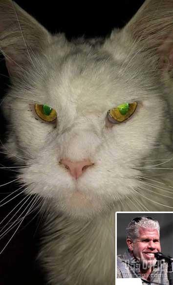 有人告诉我,今天我的猫看起来像罗恩·珀尔曼。