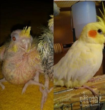 什么叫丑小鸭变白天鹅