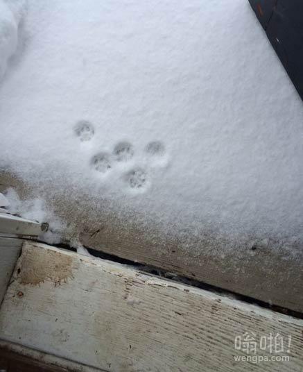 猫出门前检查了外面雪的厚度