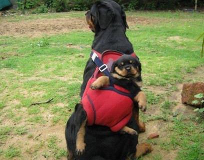 罗威背包……他甚至不知道发生了什么事情..