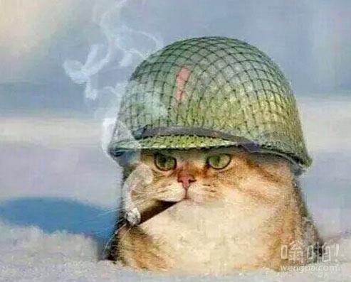 大兵猫,喜欢就点赞吧