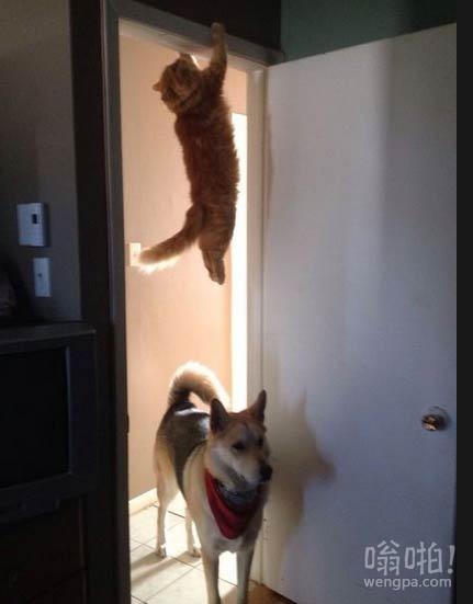呃,喵跑哪去了