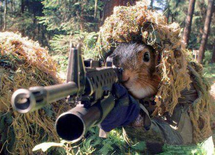 松鼠大作战