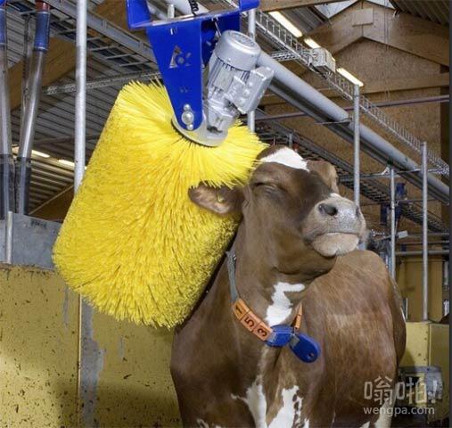 牛肉在干洗